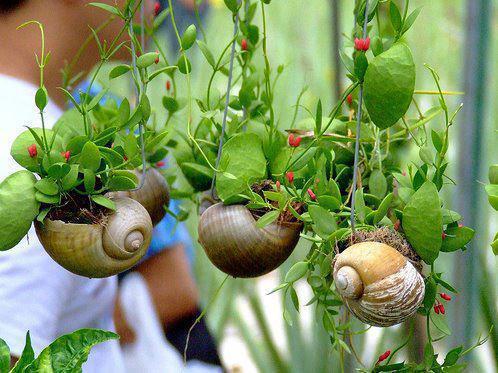 Pot Bunga Unik dari Rumah Siput
